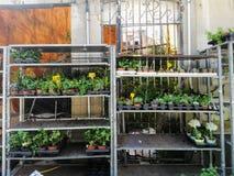 Pontevedra, Espagne ; 08/08/2018 : Support extérieur de fleuriste avec les pots de fleur colorés images libres de droits