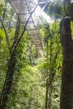 Ponti di attaccatura nella giungla di Costa Rica Fotografia Stock