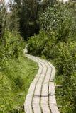 Ponti di legno Immagine Stock Libera da Diritti