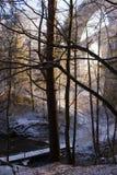 Ponticelli in foresta in Polonia Immagini Stock Libere da Diritti