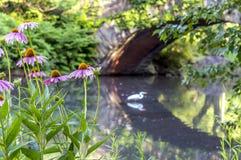 Ponticello Central Park, New York City di Gapstow Immagini Stock