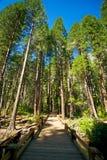 Ponticello da strascicare in alberi Fotografia Stock