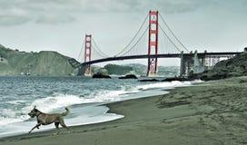 Ponticello di cancello dorato, San Francisco, Stati Uniti Fotografia Stock Libera da Diritti