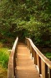 Ponticello di legno in foresta Fotografie Stock Libere da Diritti