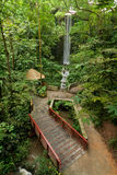 Ponticello e cascata in una foresta Fotografia Stock