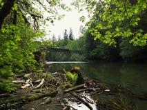 Ponticello sopra il fiume in foresta Fotografia Stock Libera da Diritti
