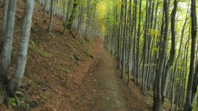 Ponto baixo aéreo da mosca sob árvores sobre um trajeto em Forest In Autumn video estoque