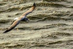 Ponto baixo do voo da gaivota sobre o mar tormentoso fotos de stock