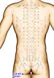 Ponto BL36 Chengfu da acupuntura do desenho, ilustração 3D Imagem de Stock