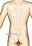 Ponto BL32 Ciliao da acupuntura do desenho, ilustração 3D Foto de Stock Royalty Free