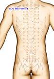 Ponto BL13 Feishu da acupuntura do desenho, ilustração 3D Fotografia de Stock
