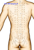 Ponto BL12 Fengmen da acupuntura do desenho, ilustração 3D Foto de Stock Royalty Free