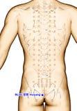 Ponto BL35 Huiyang da acupuntura do desenho, ilustração 3D Imagem de Stock