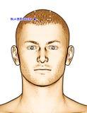 Ponto BL4 Qucha da acupuntura do desenho, ilustração 3D Imagem de Stock Royalty Free