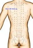 Ponto BL15 Xinshu da acupuntura do desenho, ilustração 3D Imagem de Stock Royalty Free