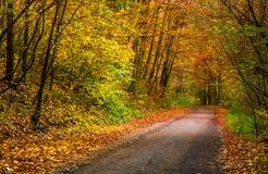 Ponto claro na rotação da estrada na floresta do outono fotos de stock royalty free