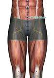 Ponto CV5 Shimen da acupuntura Foto de Stock