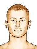 Ponto da acupuntura que tira ST2 Sibai Imagem de Stock Royalty Free
