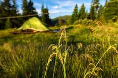 Ponto da grama em um fundo verde da barraca em um acampamento base de acampamento Foto de Stock Royalty Free