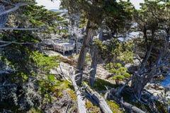 Ponto de Cypress, movimentação de 17 milhas Imagem de Stock