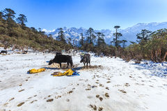 Ponto de opinião de Phedang no parque nacional de Kanchenjunga Fotos de Stock Royalty Free