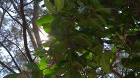 Ponto de vista de uma pessoa que coloca em uma rede em uma praia tropical video estoque