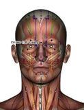 Ponto EX-HN3 Yintang da acupuntura Fotografia de Stock