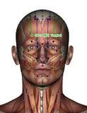 Ponto GB14 Yangbai da acupuntura Fotos de Stock Royalty Free