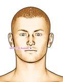 Ponto GV27 Duiduan da acupuntura do desenho, ilustração 3D Imagem de Stock Royalty Free