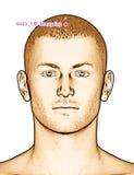 Ponto GV23 Shangxing da acupuntura do desenho, ilustração 3D Imagem de Stock Royalty Free
