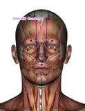 Ponto GV24 Shenting da acupuntura Imagens de Stock Royalty Free