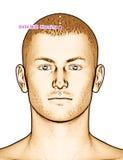Ponto GV24 Shenting da acupuntura do desenho, ilustração 3D Foto de Stock Royalty Free
