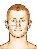 Ponto GV25 Suliao da acupuntura do desenho, ilustração 3D Fotos de Stock