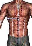 Ponto KI21 Youmen da acupuntura Imagem de Stock Royalty Free