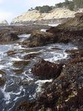 Ponto Lobos, Califórnia Fotos de Stock