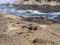 Ponto Lobos, Califórnia Foto de Stock Royalty Free