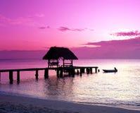 Ponto no por do sol, Tobago do pombo. imagem de stock
