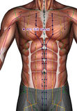 Ponto PC01 Tianchi da acupuntura Imagem de Stock Royalty Free