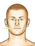 Ponto ST4 Dicang da acupuntura do desenho, ilustração 3D Imagens de Stock