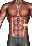 Ponto ST22 Guanmen da acupuntura, ilustração 3D Foto de Stock