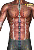 Ponto ST12 Quepen da acupuntura, ilustração 3D Imagens de Stock Royalty Free