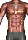 Ponto ST17 Ruzhong da acupuntura, ilustração 3D Foto de Stock