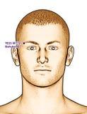 Ponto TE23 Sizhukong da acupuntura do desenho, ilustração 3D Imagens de Stock Royalty Free