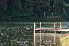Pontoon. With lake and forest Stock Photos