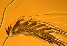 Pontos de uma colheita Imagem de Stock Royalty Free
