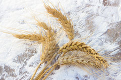 Pontos do trigo e da farinha Foto de Stock
