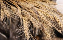 Pontos secos amarelos do centeio maduro, close up fotos de stock