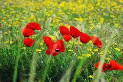 Pontos suculentos da beleza de prado imagem de stock