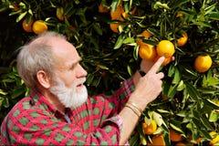 Pontos velhos do fazendeiro na fruta alaranjada Imagens de Stock Royalty Free