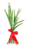 Pontos verdes do centeio (cereale do Secale), Imagens de Stock Royalty Free